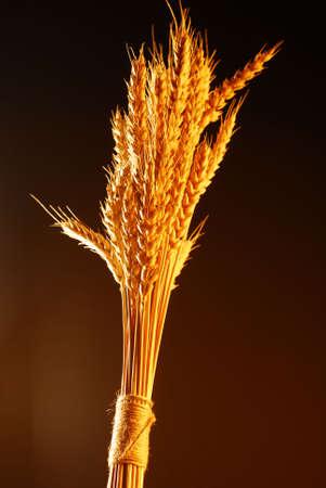 colores calidos: Bouquet de trigo con colores c�lidos sobre fondo oscuro
