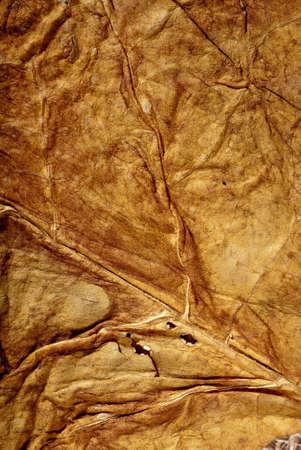 hojas secas: Primer plano de textura del tabaco secado de la hoja de oro