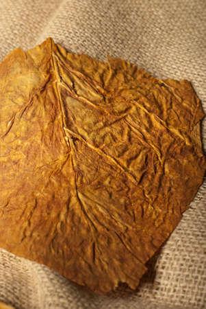 tobacco plant: Defocused virginia tobacco leaf macro on a bag