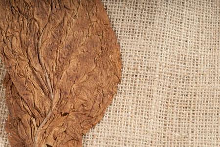 Head on shot of a pressed virginia tobacco leaf