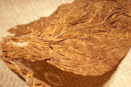 hojas parra: Cruda luz sobre una textura de hojas de tabaco secas Foto de archivo