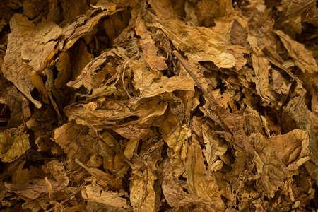 Bulk tobacco macro view, close up Stock Photo