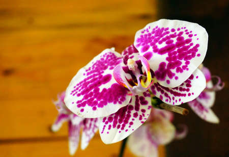 crampon: Pink and white Beautiful orchid Stock Photo
