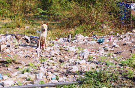 female dog: perra perdida, perro de la madre perdida en el �rea pobre Foto de archivo