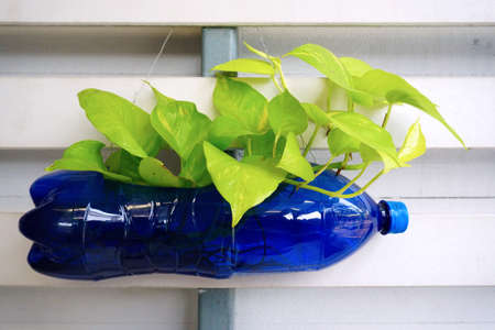 kunststoff rohr: Kleine Pflanze in Recycling-Kunststoff-Flasche Lizenzfreie Bilder