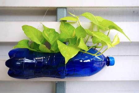 Pequeña planta en botella de plástico de reciclaje Foto de archivo