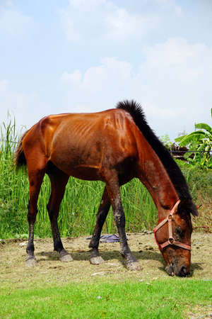 horse on field grass.