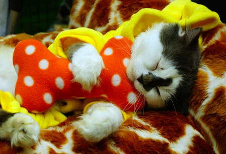 Funny kitten dress up cat is sleeping