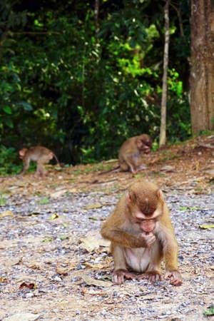 Wild monkey at Khoa Yai National park Thailand
