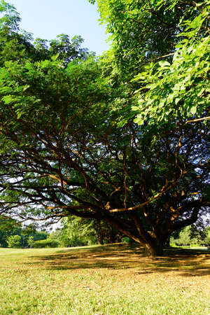 Wachirabenchathat Park or State Railway Public Park is a name of public park in Chatuchak district, Bangkok, Thailand.