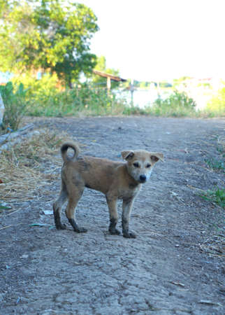 legs around: Adorable little dog played around and got dirty mud legs