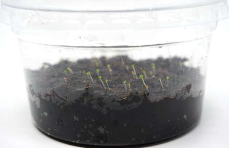 Close up pot of young plant seedlings in soil. plastic pot with closed system