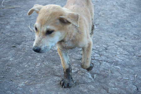 Adorable little dog played around and got focused in dirty mud legs Banco de Imagens