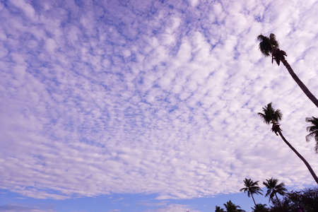 Blue sky with clouds and some coconut tree