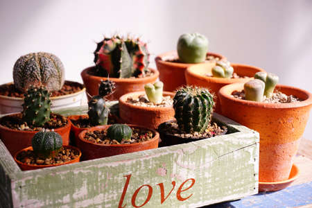 Variety of cactus pots in box, paint  love