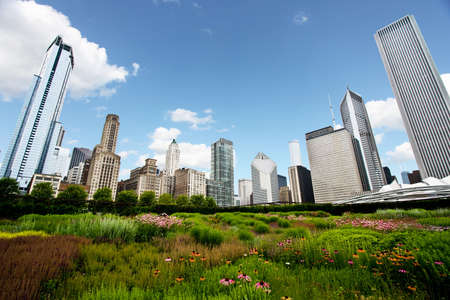 Chicago Skyline over Gardens