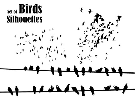 flights: Set of birds silhouettes - flying, sitting.