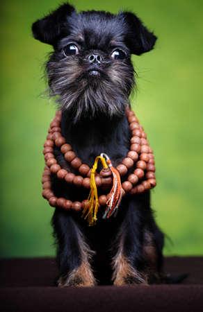 griffon dog wooden beads