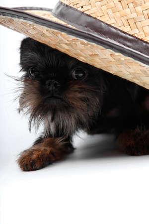 Griffon dog hat gardener Imagens