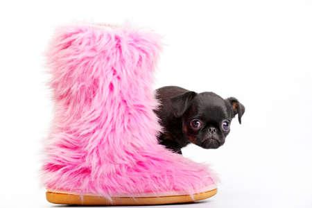 Griffon dog pink winter boots