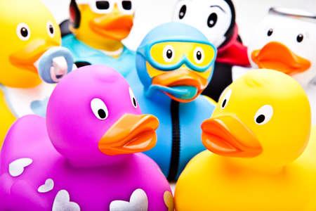 funny bathrooms ducks studio quality Reklamní fotografie - 91429746
