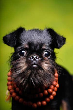 Dog Griffon Beads Indian Jewelery Stock Photo