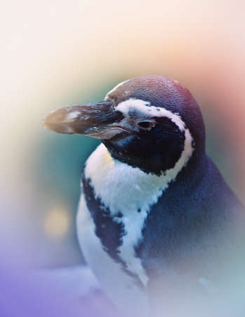 Penguin portrait winter season