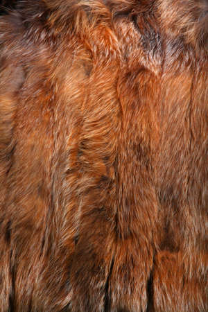 Natural Wool Texture Animals Zdjęcie Seryjne