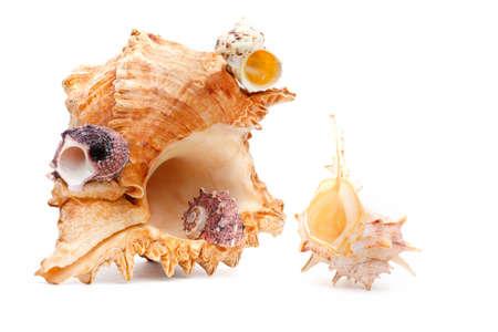 Sea shell studio quality white background