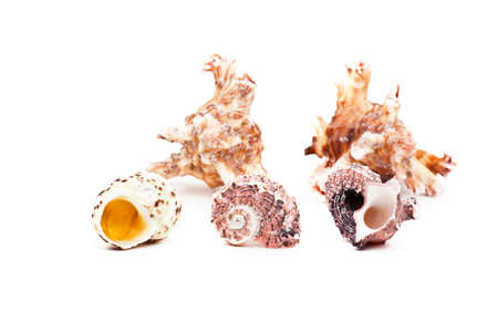 Sea shell studio quality white background
