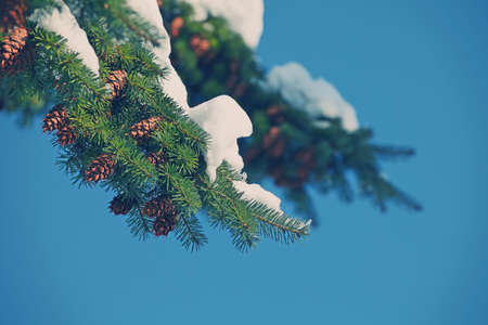 Nature Winter Fir Tree Day Light Stock Photo