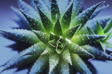 Green Cactus Macro Purple filter