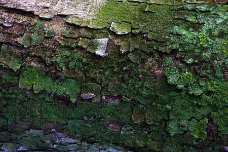 Tree Green Moss Nature