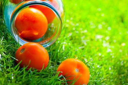 yellow tomato summer garden