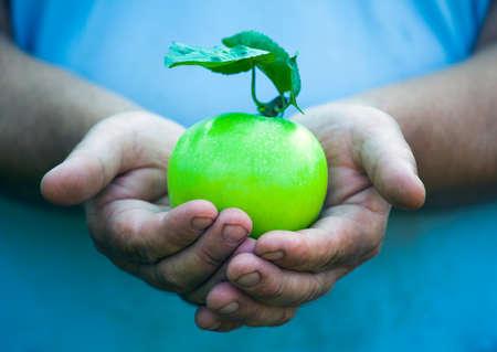 Man hands green apple garden