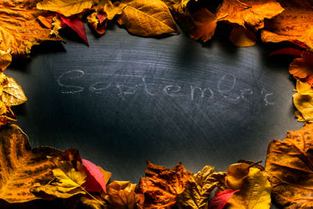 Black chalkboard autumn leavess Stock Photo