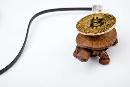bitcoin coin turtle studio