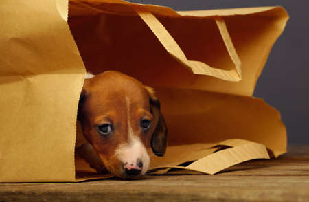 dachshund puppy paper bag