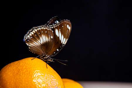 butterfly mandarin fruit dark background Stok Fotoğraf - 123292431
