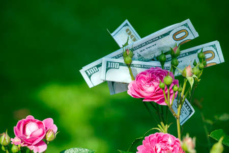 pink rose flower money dollar nobody