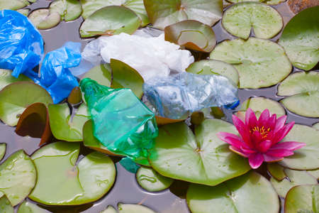 plastic bottle lake water lily