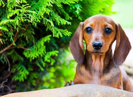 puppy portrait garden tree background