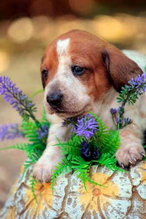puppy portrait garden flower background