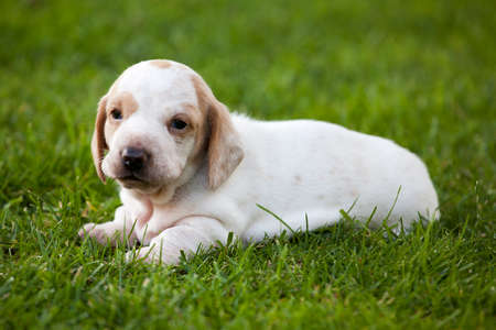 puppy portrait garden grass background