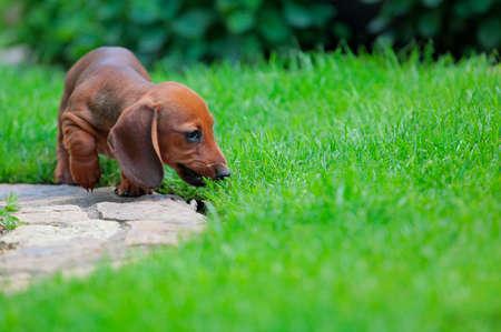 puppy portrait garden grass background Stock Photo