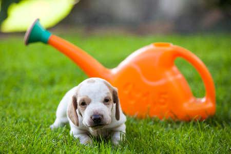puppy portrait garden grass water can background Stock Photo