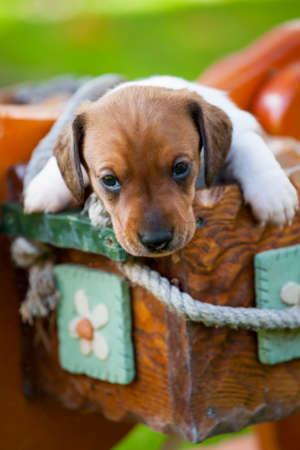puppy portrait garden grass basket background Stock Photo