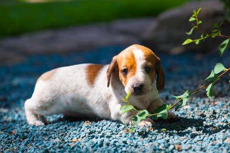 puppy portrait garden stone background