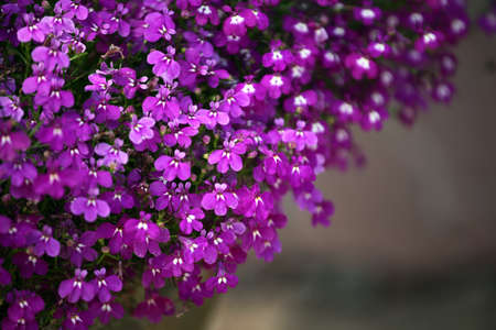 violet flower garden stone background nobody