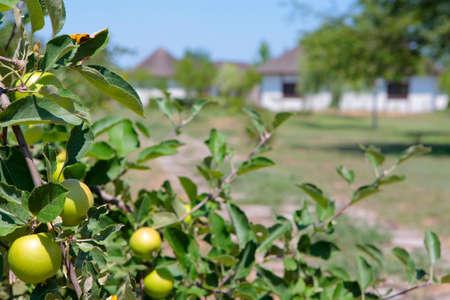 garden apple tree house background